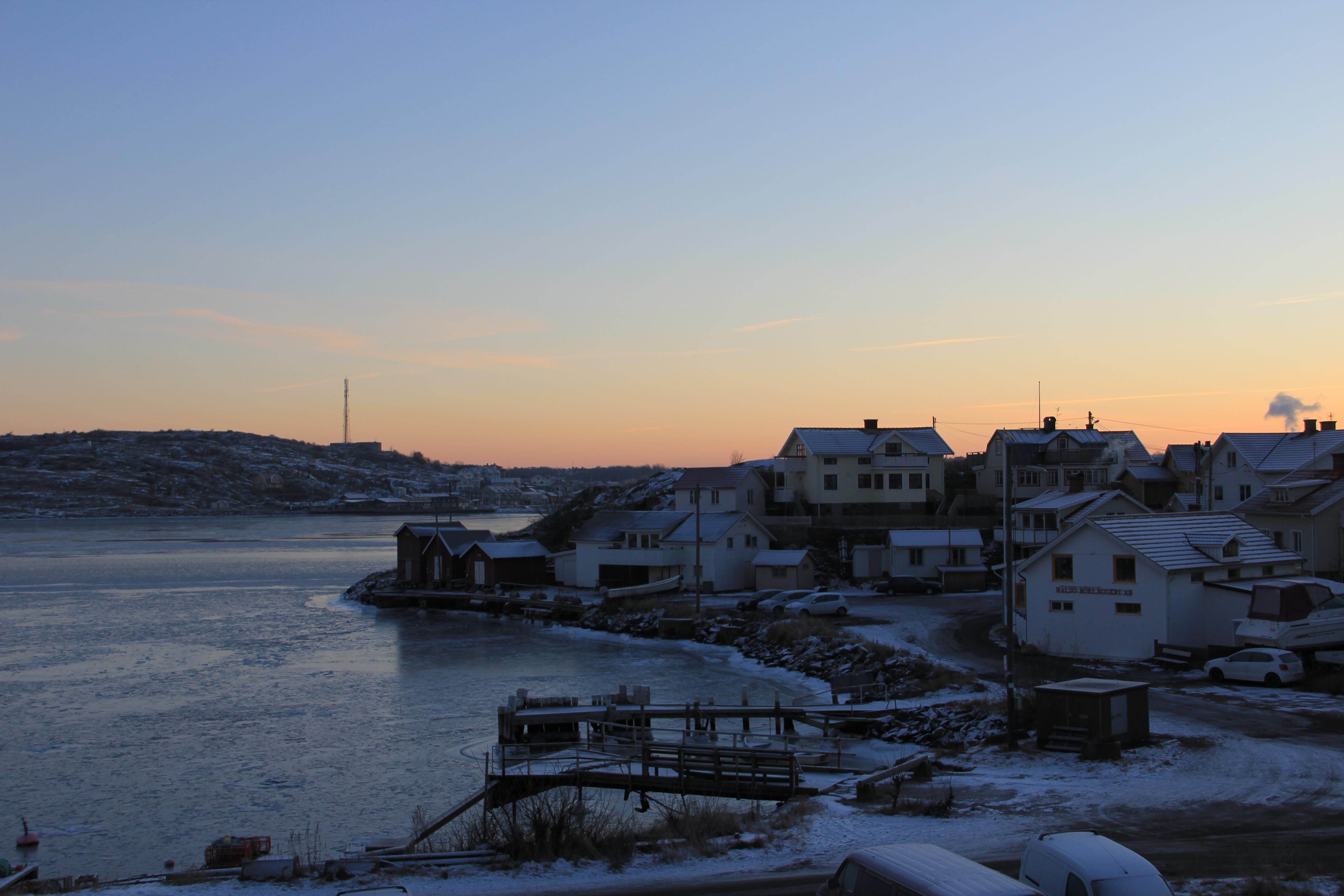 Vinter_hono_5_elsapahalso.se